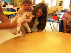 kitty visit