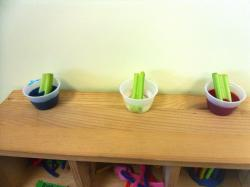 Science Experiment with Celery