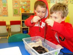 Comparing lengths of worms