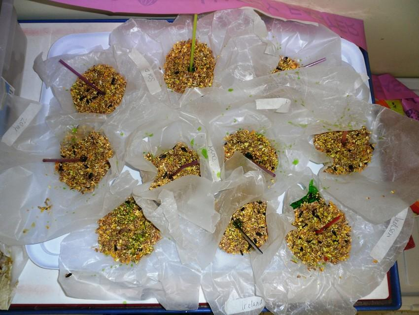 Homemade School-Age bird feeders